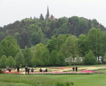 TD MENGEŠ na razstavi tulipanov in cvetja