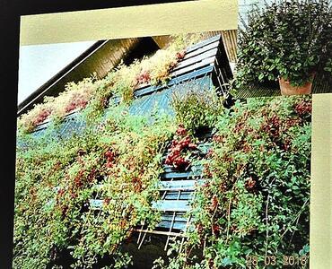 Predavanje o vrtnarjenju na balkonu