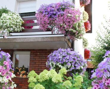 Letošnje cvetje v Občini Mengeš